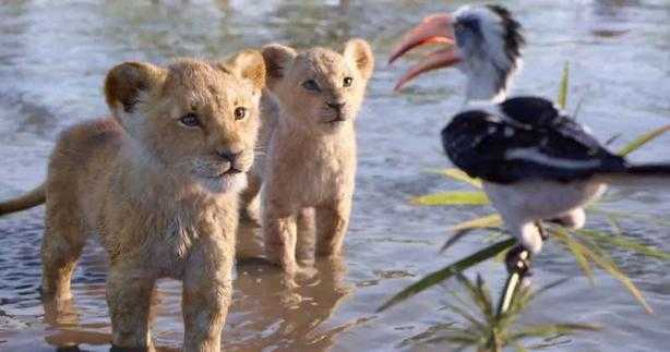 The Lion King (2019) - Simba, Nala, Zazu